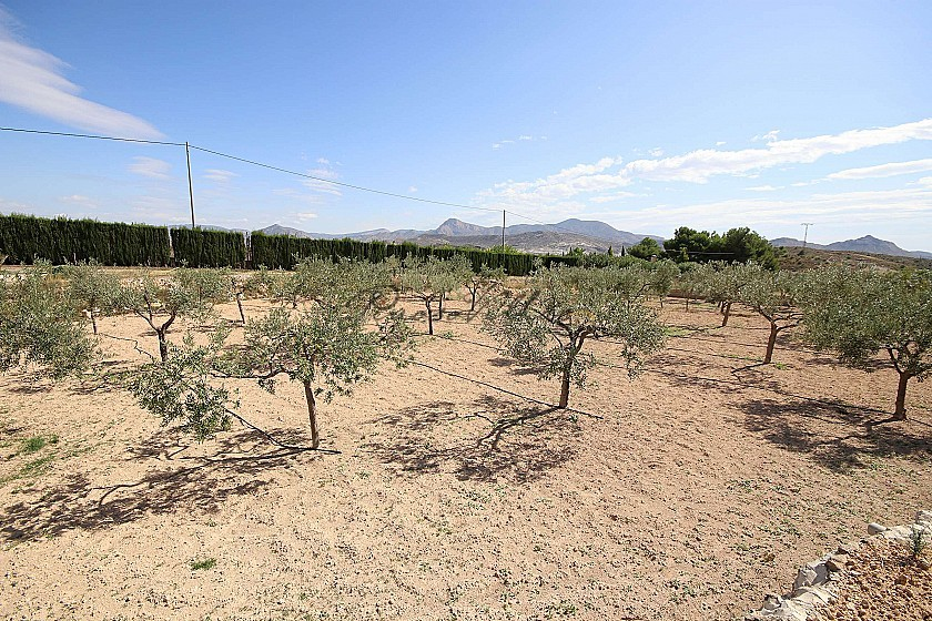 Detached Country House close to Monovar with great views in Pinoso Villas