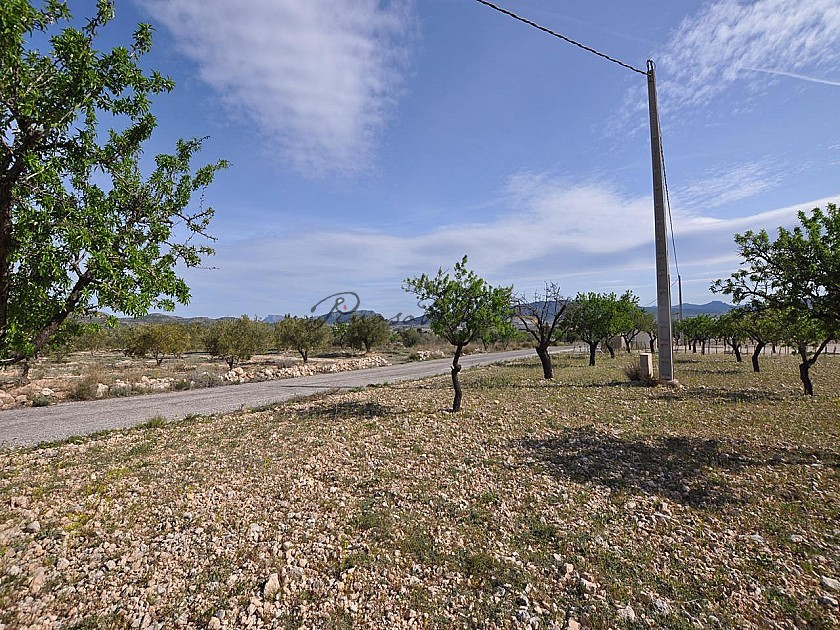 Legal Building Plot with mains water and electric in Salinas close to Sax in Pinoso Villas