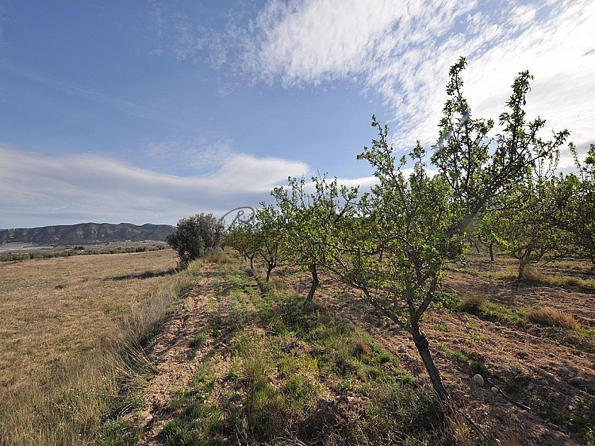 Large building plot, Walking distance to Salinas Near Sax in Pinoso Villas